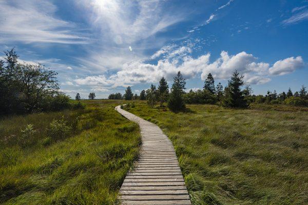 parc-naturel-des-hautes-fagnes-eifel-37001