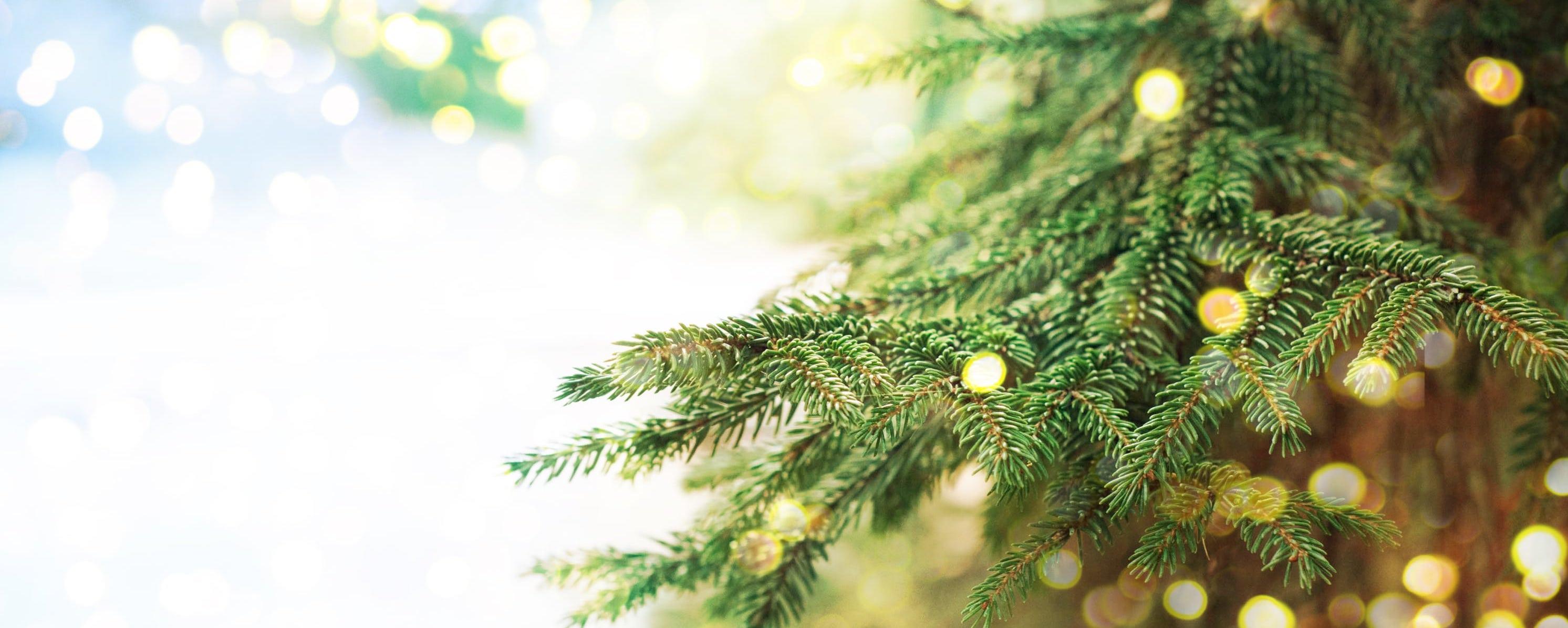 Kerstverblijf in de belgische Ardennen